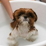浴槽をまたがずに一人で安全に入れる「TIPTUB Bath」