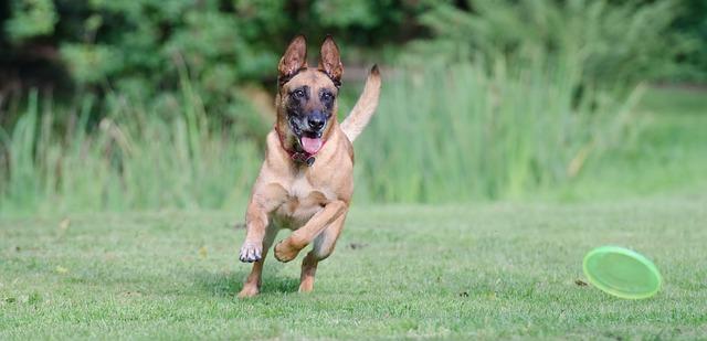 公園で走り回る犬