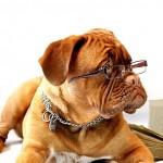 眼鏡型デバイスを装着した視覚障がい者を遠隔サポート『guide glass』