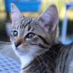インテリアに合う柔らかモダンな繭型の猫ハウス『Meyou』、障がい者雇用の一助にも