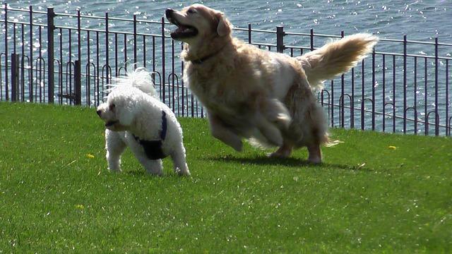 走り回っている犬