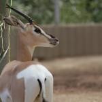聴覚障がいの生徒も納得!動物園の課外授業ガイドアプリ