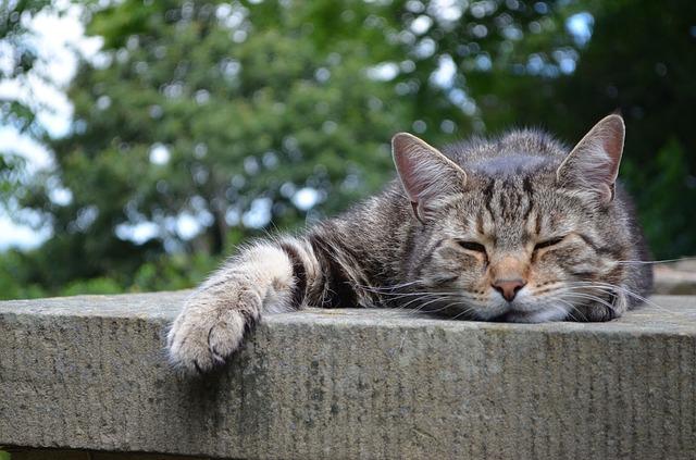 眠そうなネコ